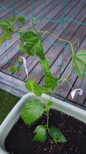 plant_120711_1