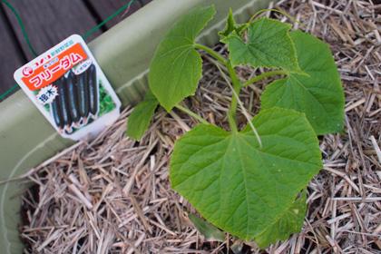 plant_120711_2