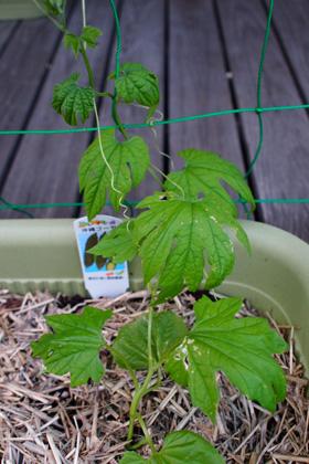 plant_120711_3